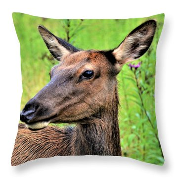 Attentive Yearling Throw Pillow