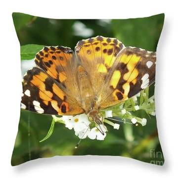Attractive Painted Lady Butterfly Throw Pillow