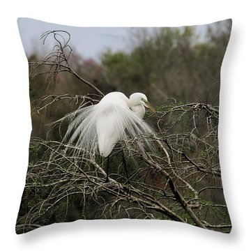 Attractive Plumage Throw Pillow