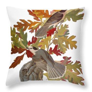 Audubon: Jay Throw Pillow by Granger