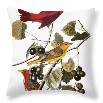 Audubon: Tanager Throw Pillow by Granger