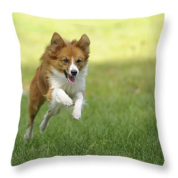 Aussi At Play Throw Pillow