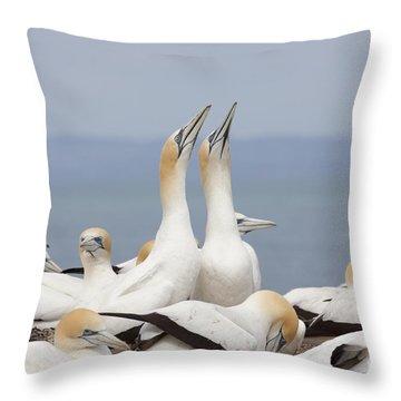 Australasian Gannets Courting Throw Pillow