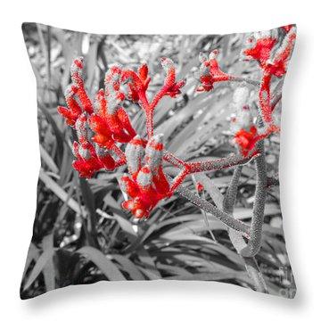 Australian Kangaroo Paws In Kings Park - Perth Throw Pillow
