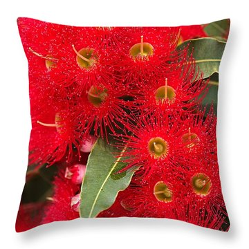 Australian Red Eucalyptus Flowers Throw Pillow