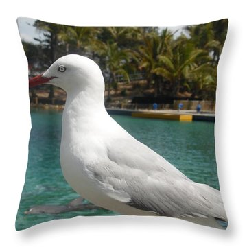 Australian Seagull Throw Pillow