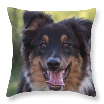 Australian Shepherd Throw Pillow by Cathy Donohoue