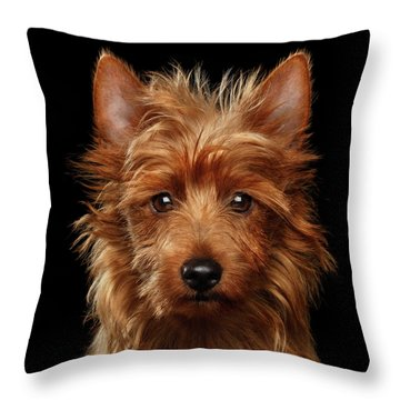 Australian Terrier Throw Pillow