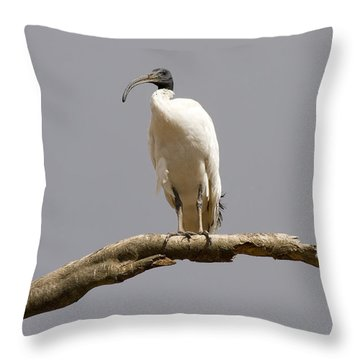 Australian White Ibis Perched Throw Pillow