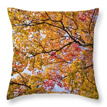 Autumn Acer Palmatum Throw Pillow