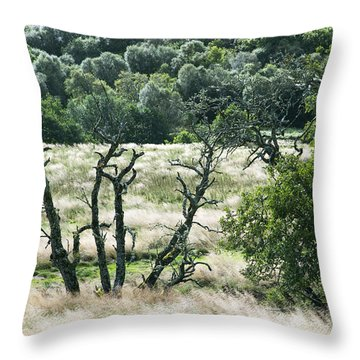 Autumn And Grass In Isle Of Skye, Uk Throw Pillow
