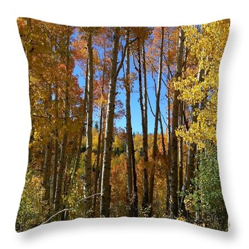 Autumn Aspen Grove Dixie National Forest Utah Throw Pillow by Deborah Moen