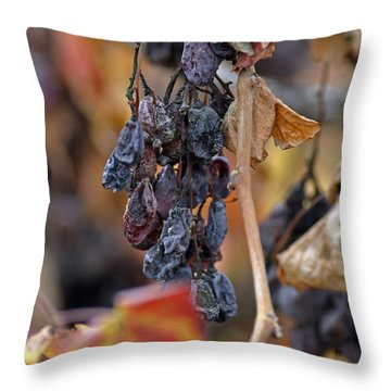 Throw Pillow featuring the photograph Autumn At Lachish Vineyards 4 by Dubi Roman
