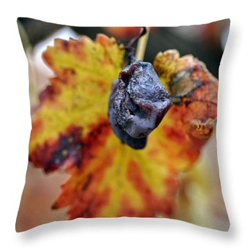 Throw Pillow featuring the photograph Autumn At Lachish Vineyards 5 by Dubi Roman
