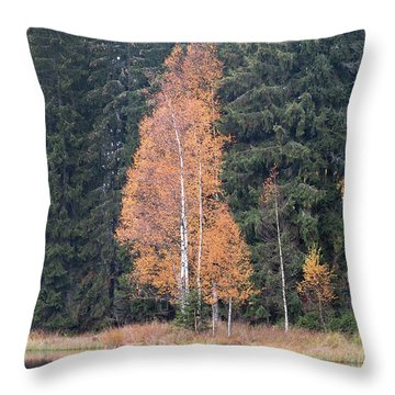 Autumn Birch By The Lake Throw Pillow by Michal Boubin