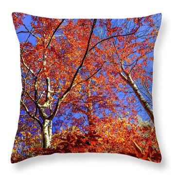 Autumn Blaze Throw Pillow by Karen Wiles