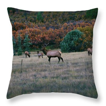 Autumn Bull Elk Throw Pillow