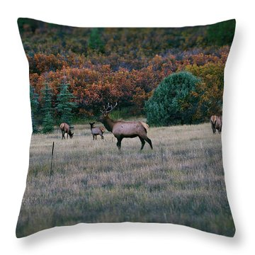 Autumn Bull Elk Throw Pillow