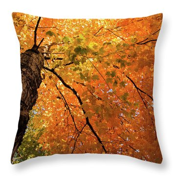 Autumn Canopy In Maine Throw Pillow