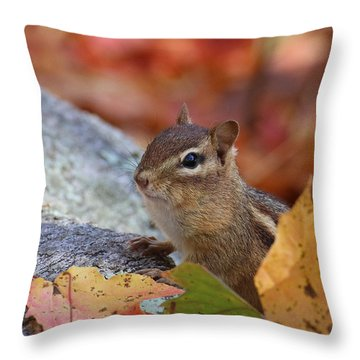 Throw Pillow featuring the photograph Autumn Chipmunk by William Selander
