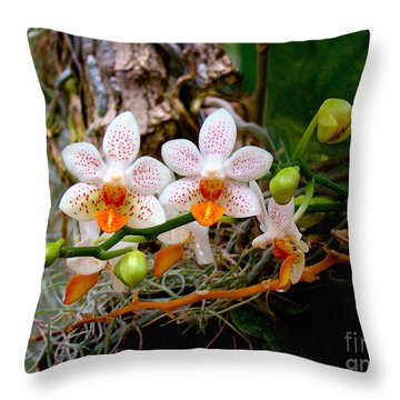 Autumn Colored Orchids Throw Pillow by Sue Melvin