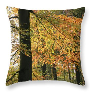 Autumn Colored Trees In Forest Throw Pillow