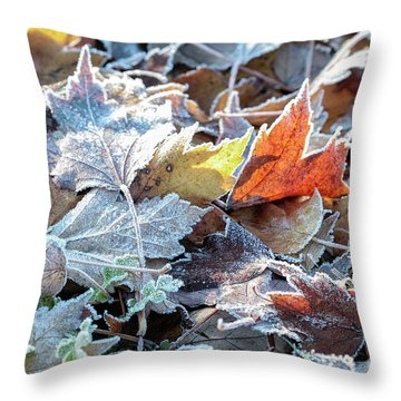 Throw Pillow featuring the photograph Autumn Ends, Winter Begins 3 by Linda Lees