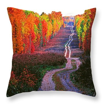 Autumn Forest Track Throw Pillow by Dennis Cox WorldViews