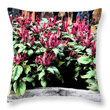 Throw Pillow featuring the painting Autumn Fowers 9-11-15 by Mas Art Studio