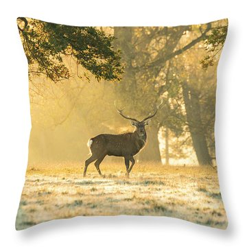 Throw Pillow featuring the photograph Autumn Frost by Scott Carruthers