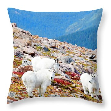 Autumn Goats On Mount Bierstadt Throw Pillow