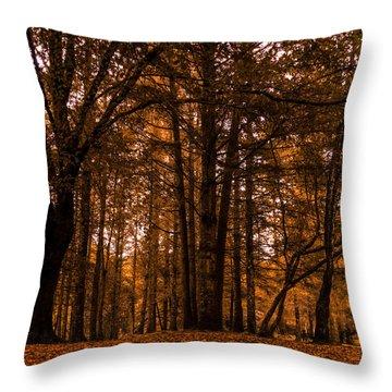 Autumn In Colligan Wood Throw Pillow