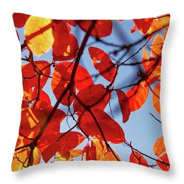 Autumn In The Arboretum Throw Pillow