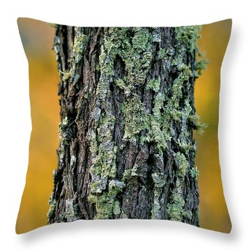 Autumn Ironbark Throw Pillow