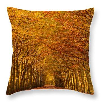 Autumn Lane In An Orange Forest Throw Pillow