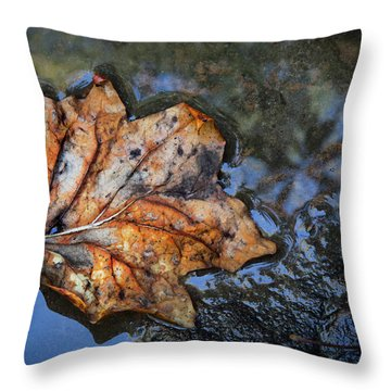 Throw Pillow featuring the photograph Autumn Leaf by Debra and Dave Vanderlaan