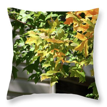 Autumn Leaves Against White Throw Pillow by Michele Wilson