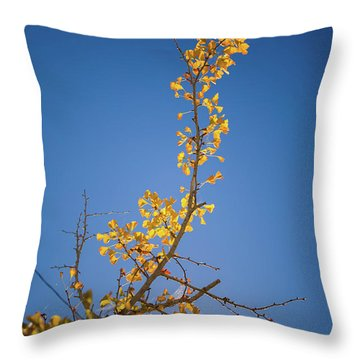 Throw Pillow featuring the photograph Autumn Leaves Is Changing Color During October Fall Season With  by Jingjits Photography