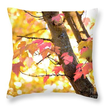 Throw Pillow featuring the photograph Autumn Leaves by Ivy Ho