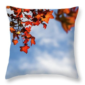 Throw Pillow featuring the photograph Autumn Leaves  by Jingjits Photography