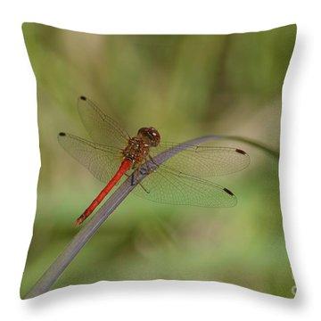 Autumn Meadowhawk Throw Pillow