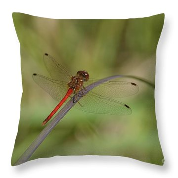 Autumn Meadowhawk Throw Pillow