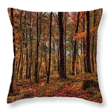 Autumn On The Ice Age Trail Throw Pillow