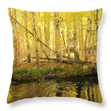 Autumn Soft Light In Stream Throw Pillow