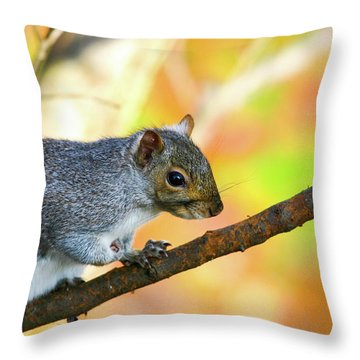 Throw Pillow featuring the photograph Autumn Squirrel by Karol Livote