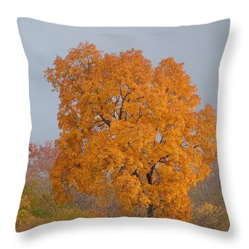 Autumn Tree Throw Pillow by Donald C Morgan