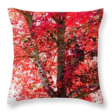 Throw Pillow featuring the photograph Autumn Tree by Michael Dohnalek