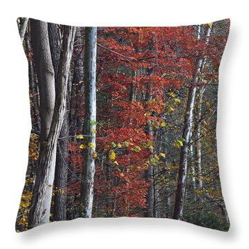 Autumn Trees 8261c Throw Pillow