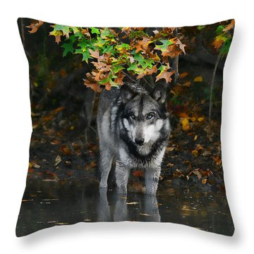 Throw Pillow featuring the photograph Autumn Wolf by Shari Jardina