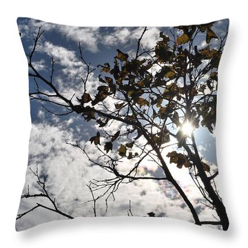 Autumn Yellow Back-lit Tree Branch Throw Pillow